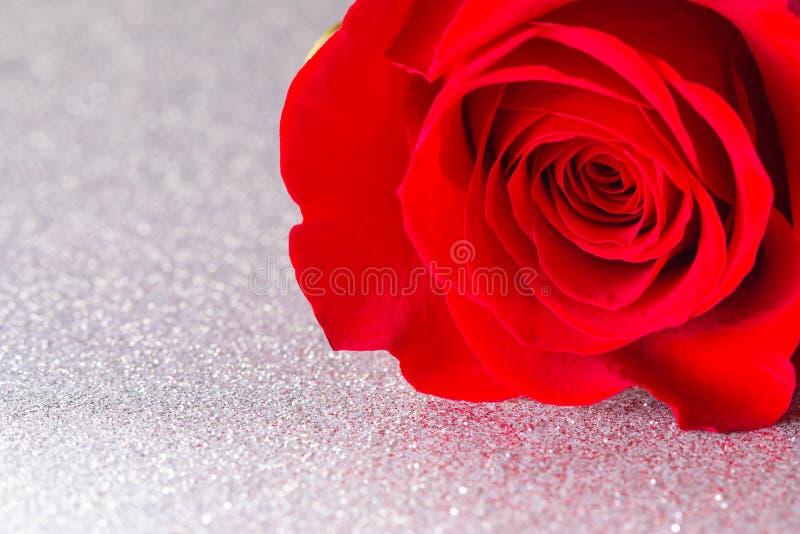 Rose rouge simple sur un Tableau argenté image libre de droits