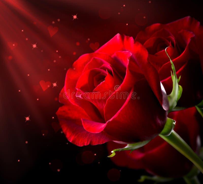 Rose rouge. St Saint-Valentin image libre de droits