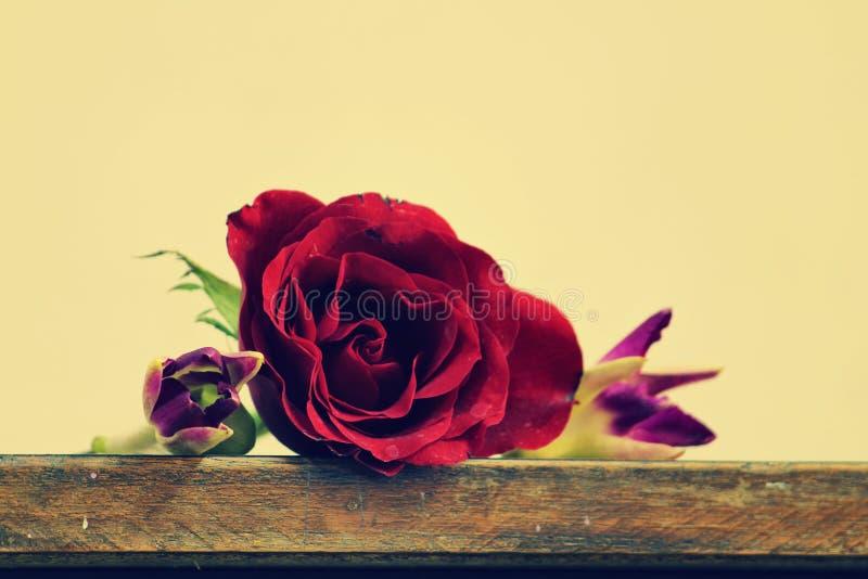 Rose rouge sur la vieille table en bois photos libres de droits