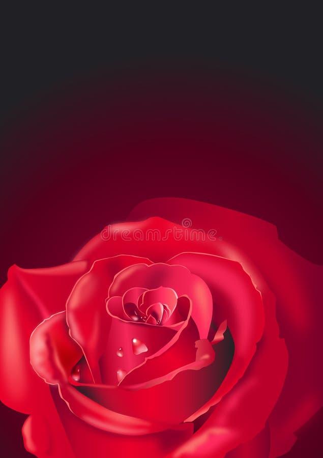 Rose rouge sur le noir photos stock