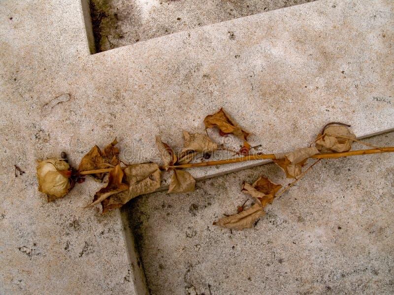 Rose sèche sur la pierre tombale images libres de droits