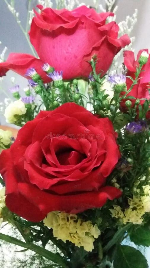 Rose& x27; s royaltyfri fotografi