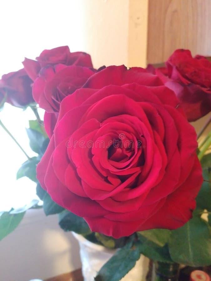 Rose& x27 ; s sont rouge photos libres de droits