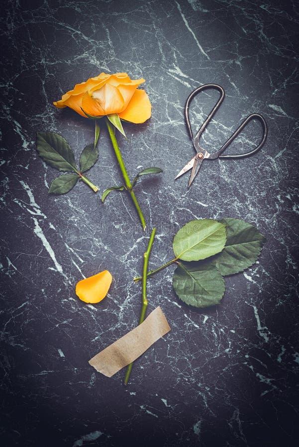 Rose With Scissors arkivfoto