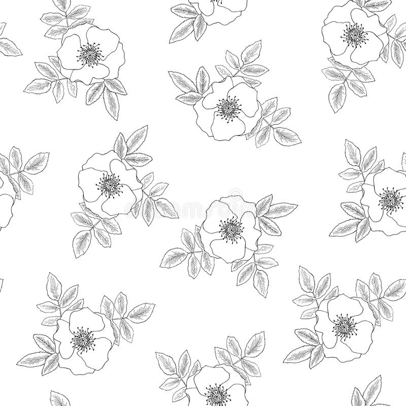 Rose seamless texture vector illustration