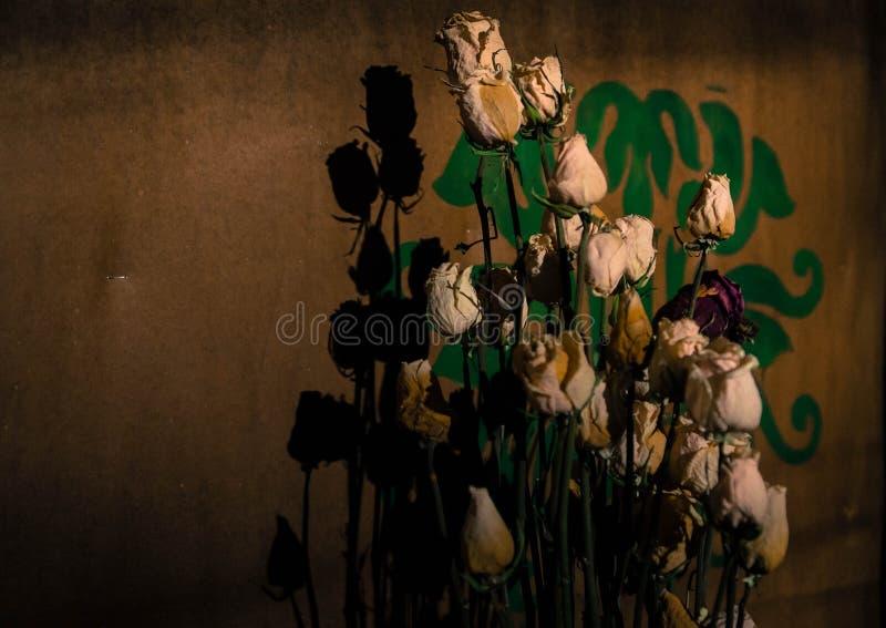 Rose secche con la loro ombra sulla parete fotografia stock