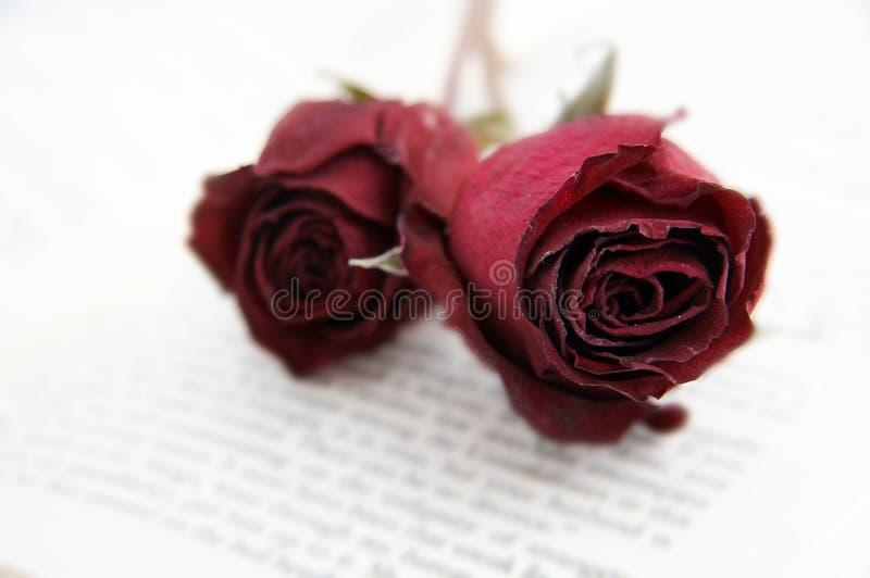 Rose secche su un libro fotografia stock libera da diritti