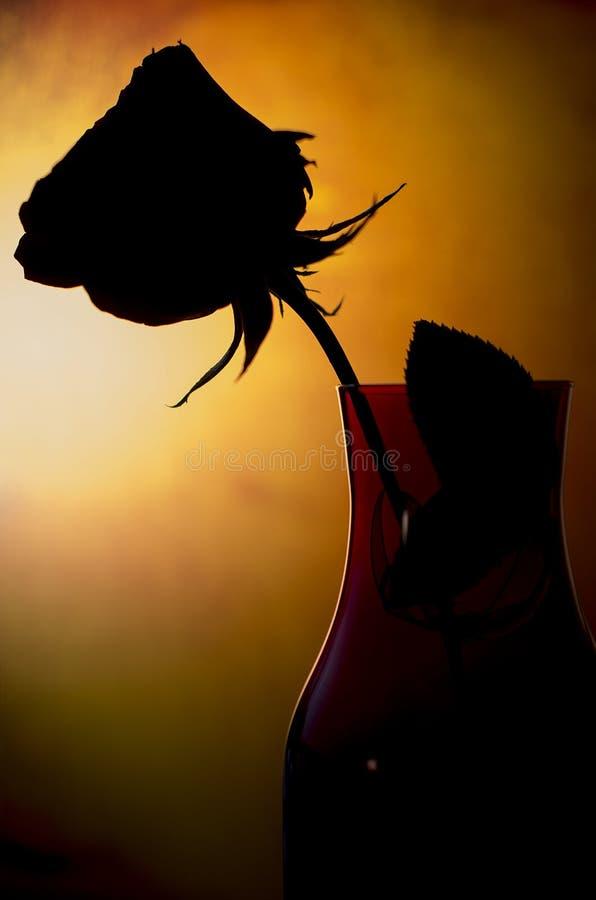 Rose Silhouette fotos de archivo