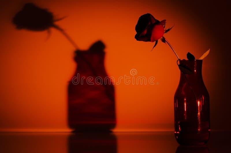 Rose Silhouette imagenes de archivo