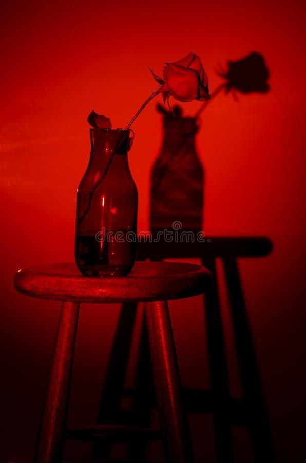 Rose Silhouette foto de archivo libre de regalías
