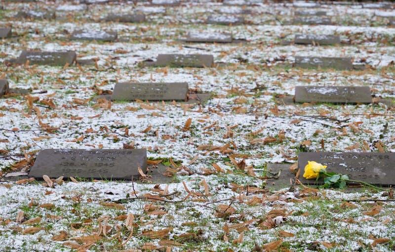 Rose simple de jaune se trouvant sur les pierres commémoratives photos libres de droits