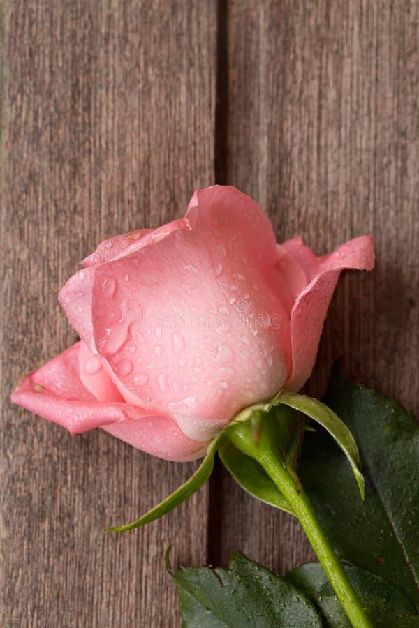 Rose simple de rose avec des gouttes de l'eau sur le vieux fond en bois, v photo libre de droits