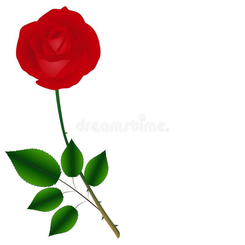 rose simple de rouge sur une tige verte avec des feuilles d'isolement sur le fond blanc illustration de vecteur