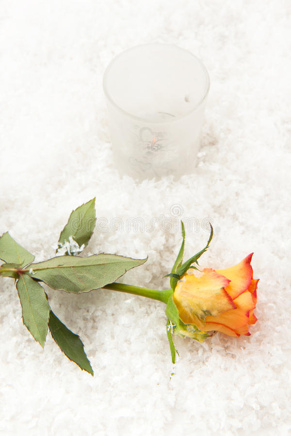 Download Rose on the snow stock image. Image of celebration, glass - 16939255
