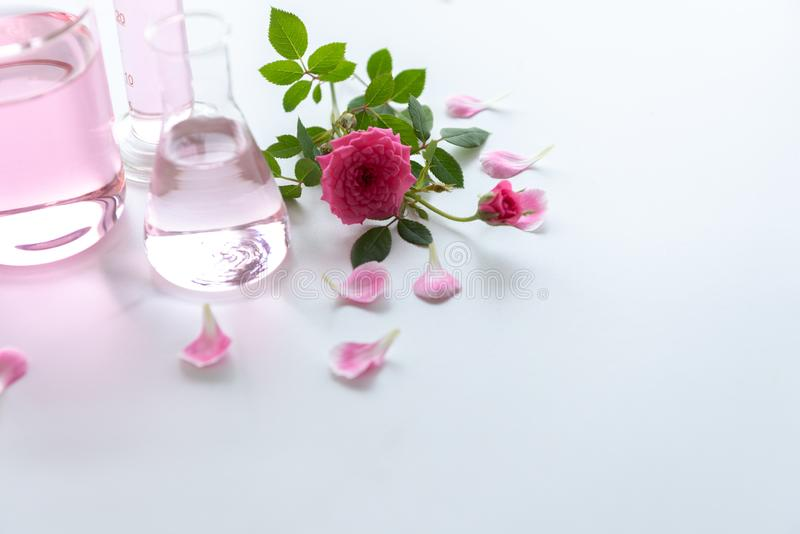 Rose spa treatments on white wooden table. Healthcare and body therapy massage relaxation concept. Beauty and Healthy theme. Pure. Natural extract and Medical stock image