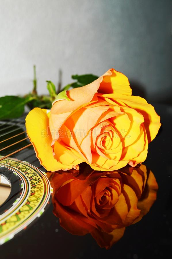 Rose on strings, close-up royalty free stock photos