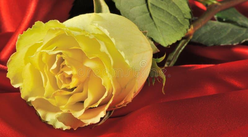 Rose sur la soie rouge photo stock