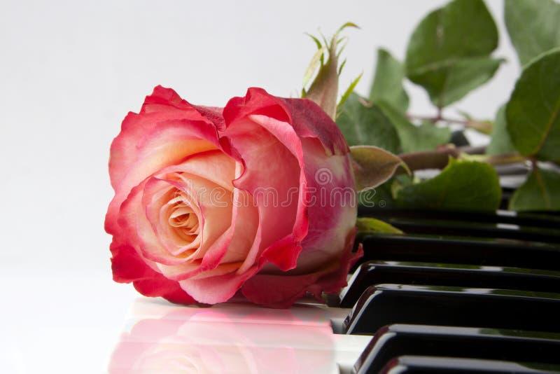 Rose sur le piano images stock