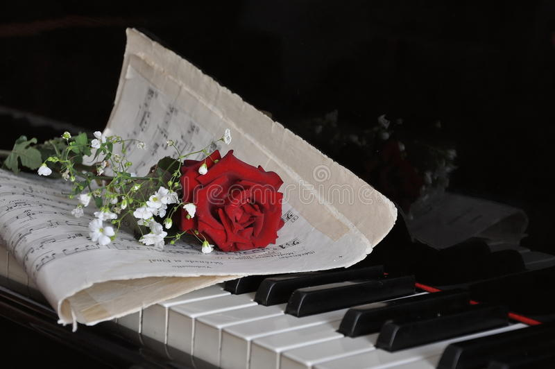 Rose sur le piano image libre de droits