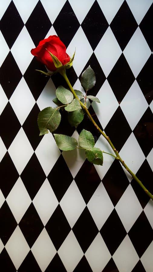 Rose sur le plateau photos stock