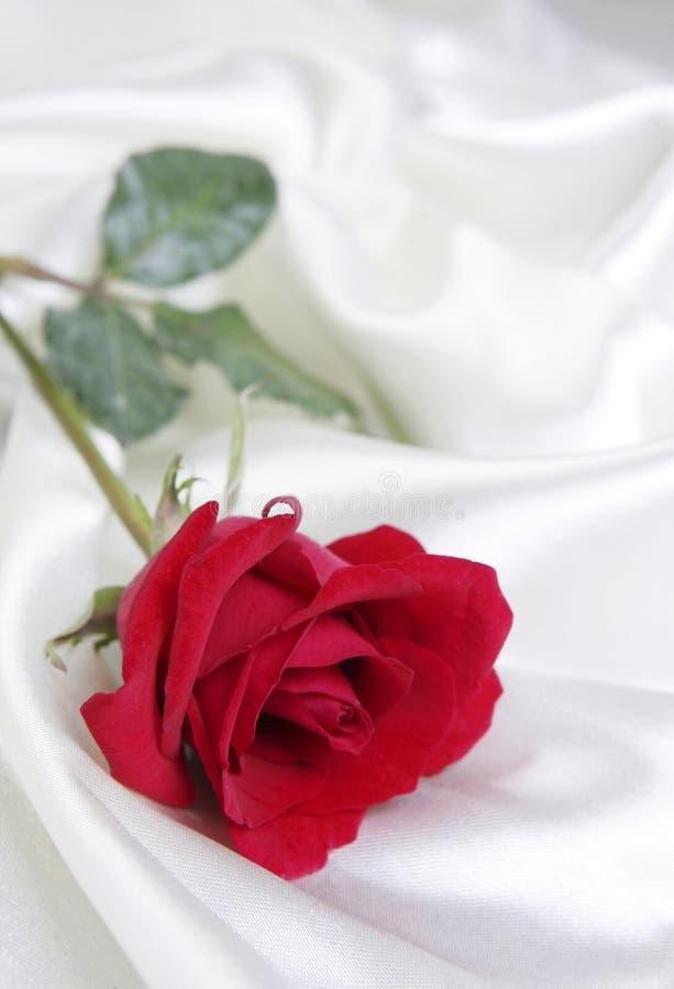 Rose sur le satin blanc image libre de droits