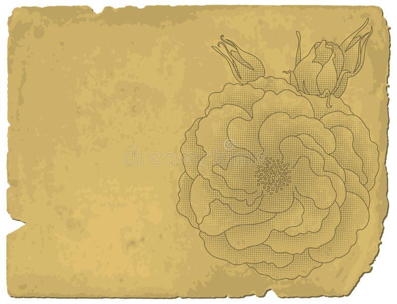 Rose sur le vieux papier illustration stock