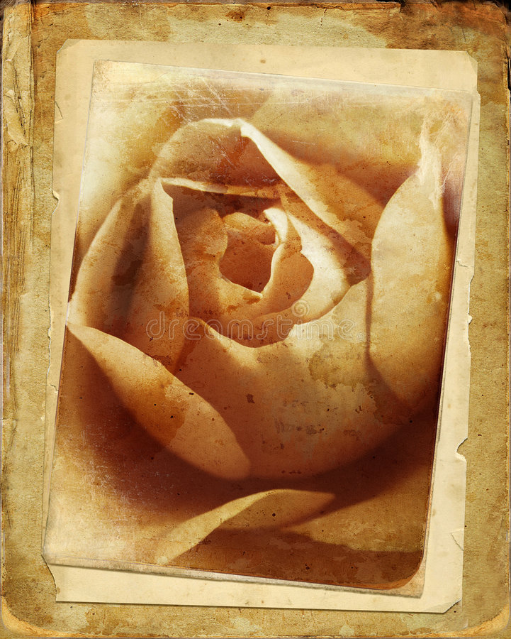 rose tappning royaltyfri illustrationer