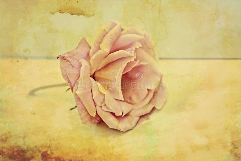 Rose tappningbakgrund för Pink arkivfoto