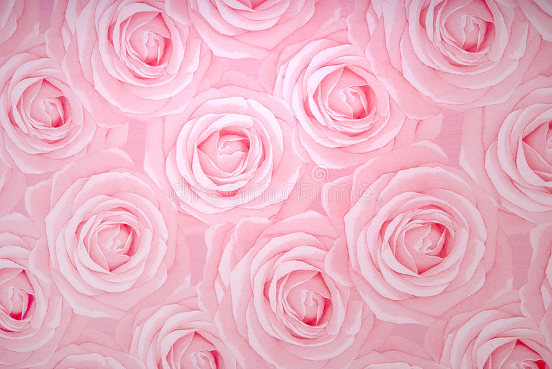 Download Rose texture stock photo. Image of rose, flowers, texture - 8839096