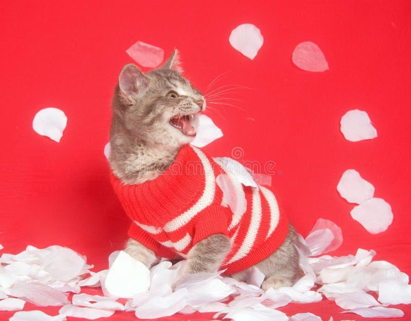 rose tröja för kattungepetalsred royaltyfria bilder