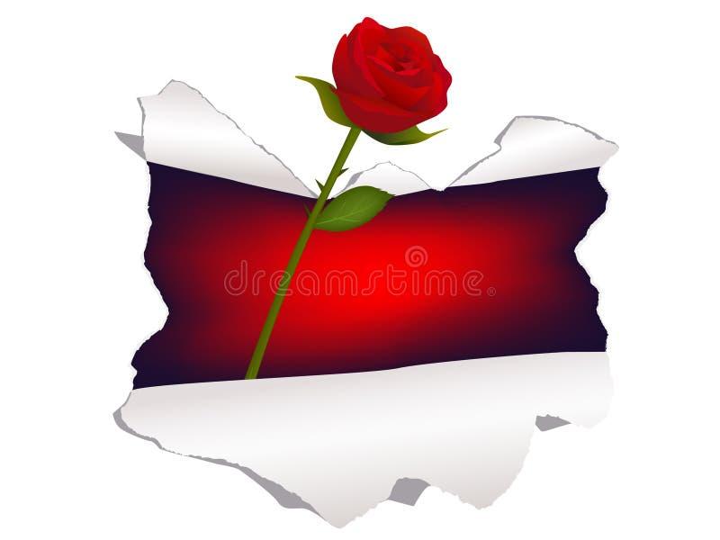 Rose a través del agujero en el papel ilustración del vector