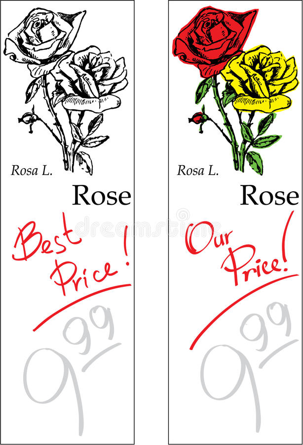 Download Rose - Two Price Tags stock vector. Image of flower, isolated - 10067592