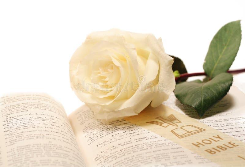 Rose und Bibel stockbilder