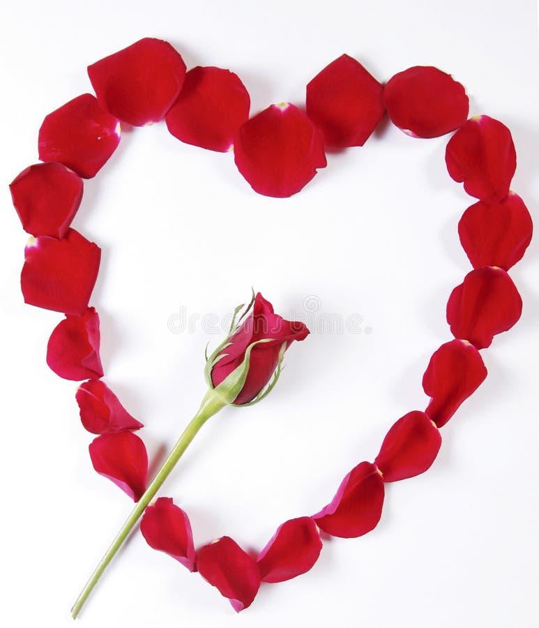 Rose und Blumenblätter stockbilder