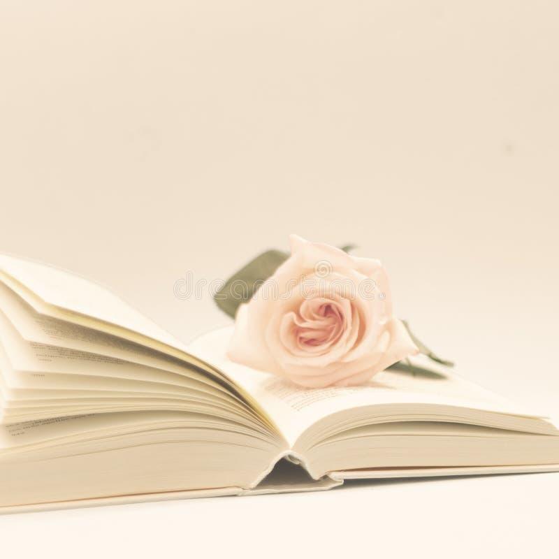 Rose und Buch stockfotografie