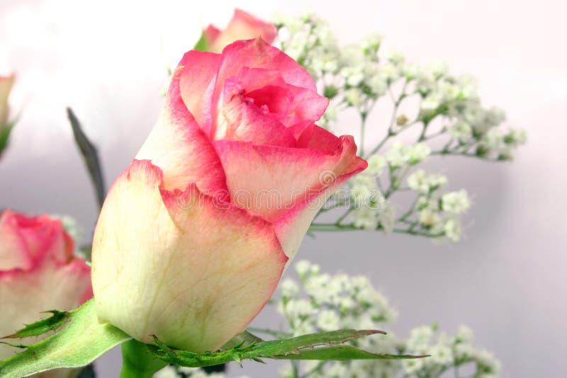 Rose und Gypsophila lizenzfreie stockfotografie