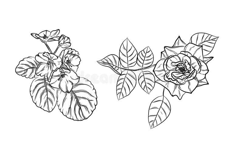 Rose und Veilchen stock abbildung