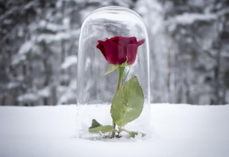 Rose Under Glass vermelha encantado imagens de stock royalty free