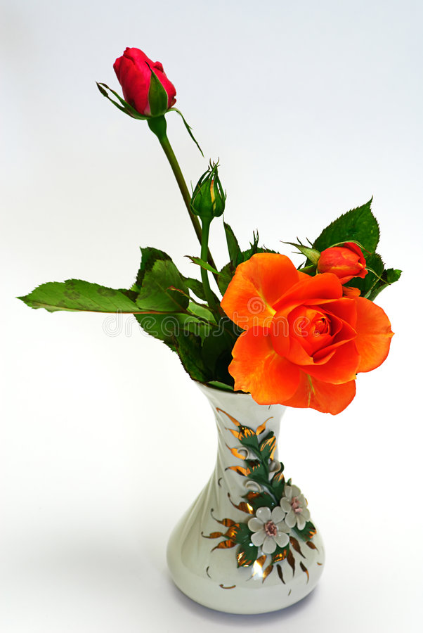 Download Rose in vase stock photo. Image of plant, vase, nature - 6589398