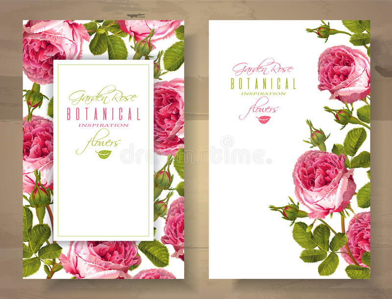 Rose vertical banners. Vector botanical vertical banners with garden rose flowers on white background. Floral design for natural cosmetics, perfume, health care vector illustration