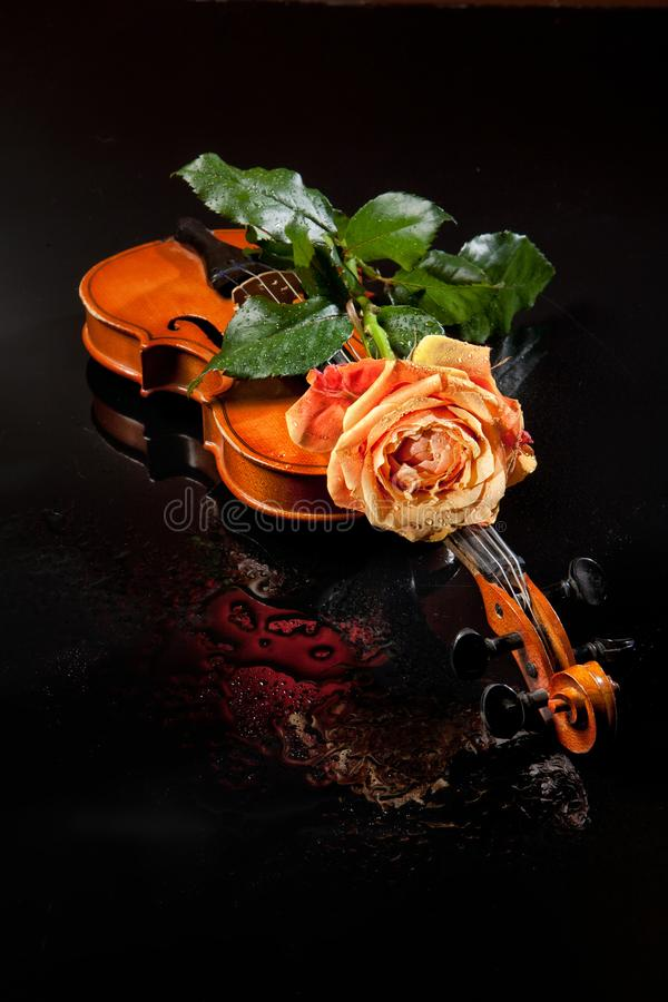 Rose And Violin royalty free stock photography