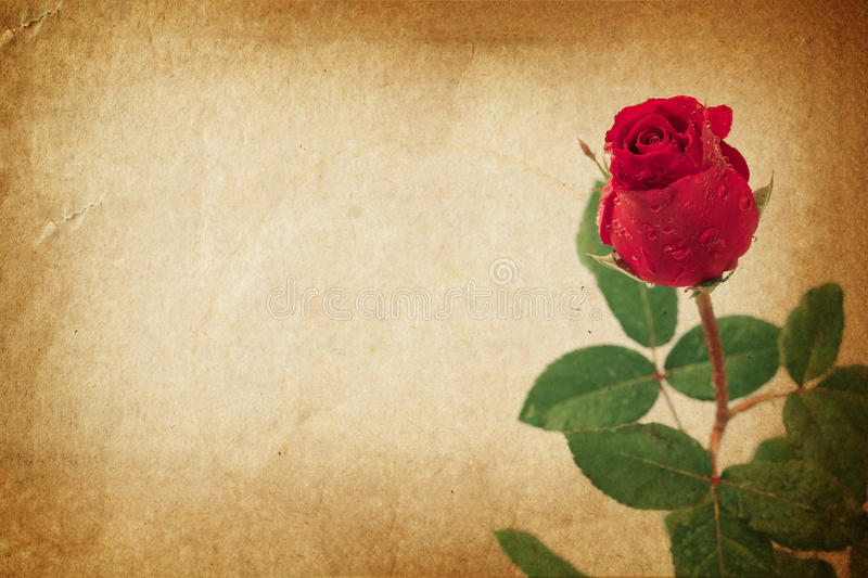 Rose on vintage old paper for text and background stock illustration