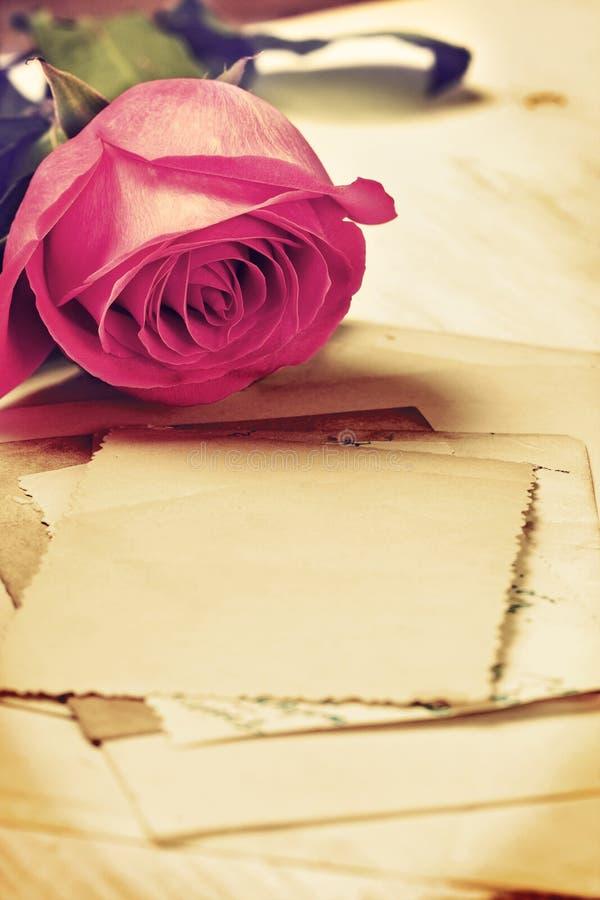 Rose (vintage) stock image