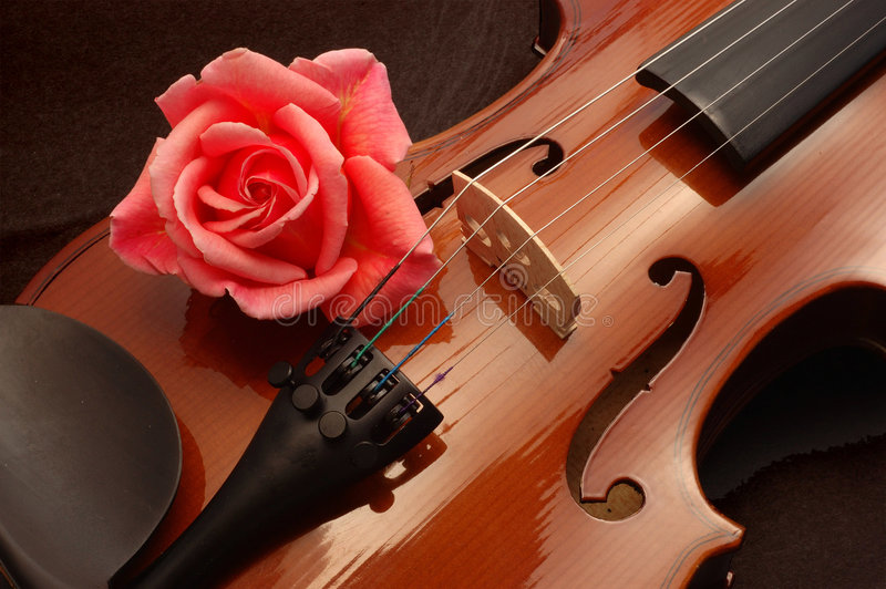 Rose on violin royalty free stock photo