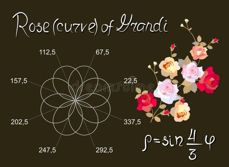 Rose von Guido Grandi ist schöne mathematische Kurve Pädagogische Karte im Vektor lizenzfreie abbildung