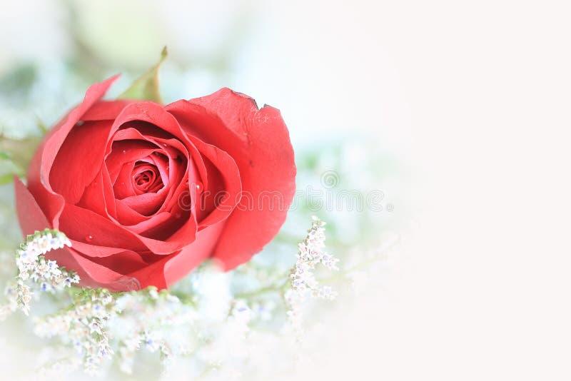Rose von Liebe 2 stockbilder