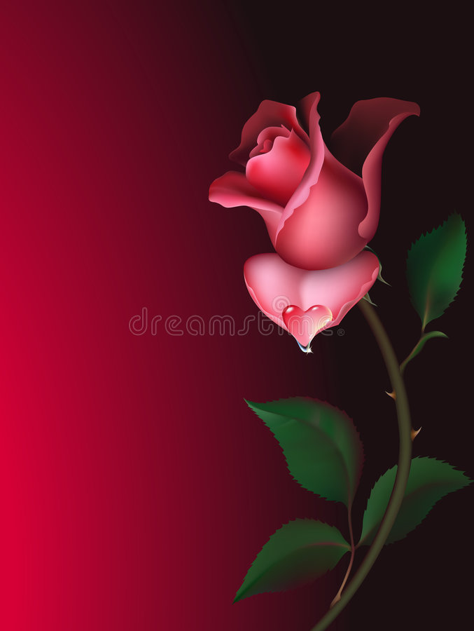 Rose with water drop royalty free illustration