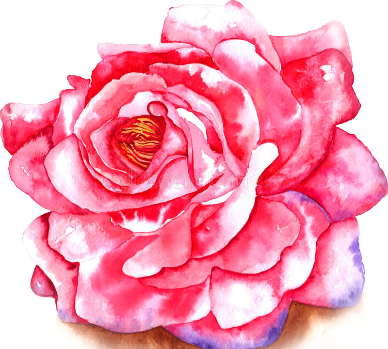 Free Rose Watercolor Stock Photography - 62250442