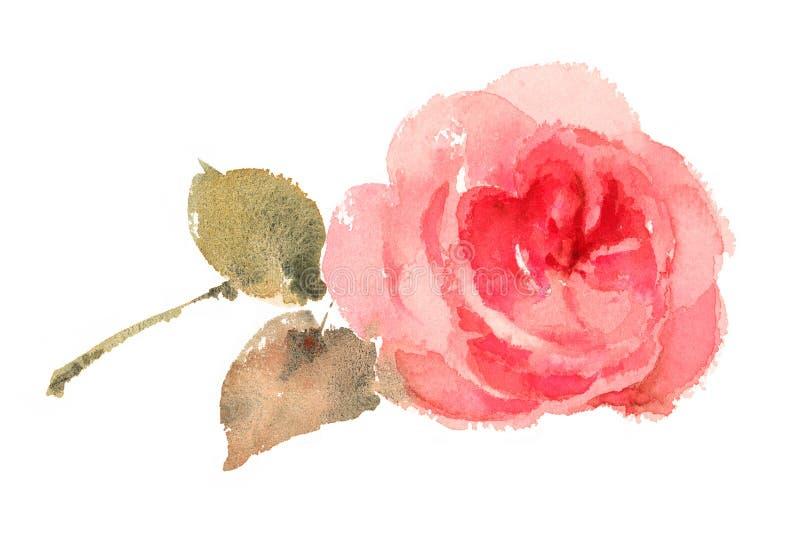 Rose Watercolor Hand Drawn rosada ilustración del vector