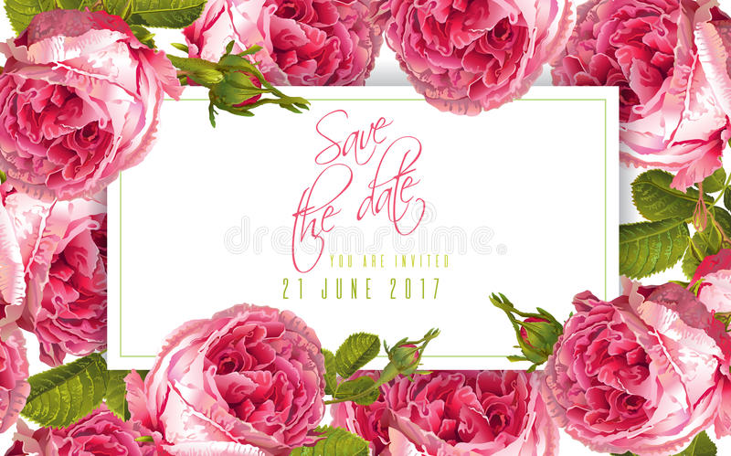 Rose wedding invitation. Vector wedding invitation horizontal card with garden rose flowers on white background. Can be used as floral design for cosmetics royalty free illustration